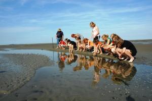Nachhaltigkeit hautnah erleben im Weltnaturerbe Wattenmeer