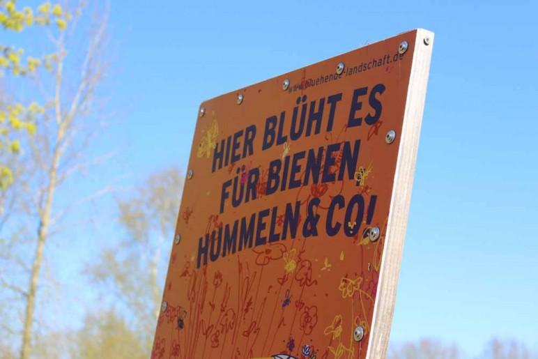 Streuobstwiese Jugendherberge Thülsfeld21