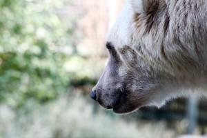 djh_osnabrueck_zoo_2286